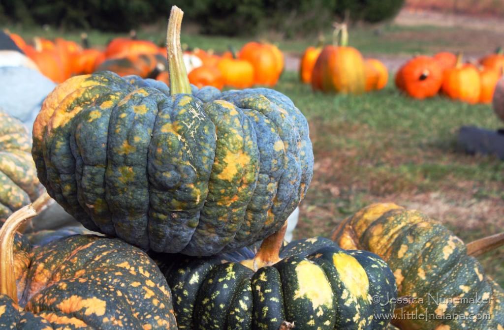 Rensselaer, Indiana: Mathews Pumpkin Patch