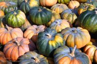 Rensselaer, Indiana: Mathew's Tree Farm and Pumpkin Patches