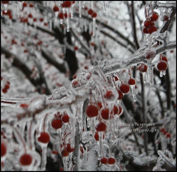 IMG_0624 Cherries_edited-1 copy