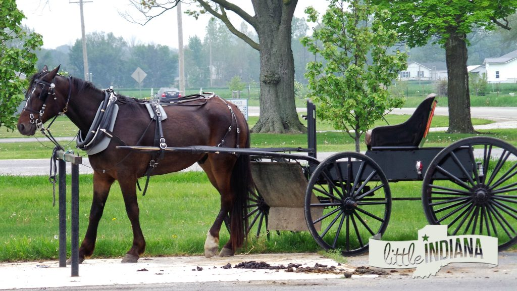 Indiana Old Order Amish Horse and Buggy