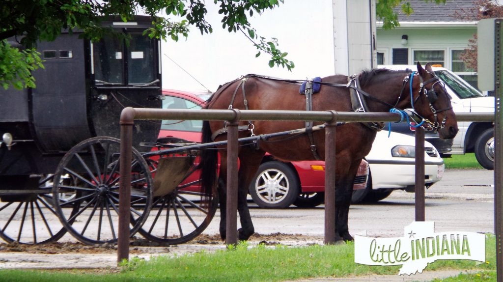 Northern Indiana Amish Horse and Buggy