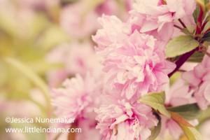 Indiana Spring