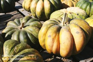Mathews Tree Farm and Pumpkin Patch in Rensselaer, Indiana