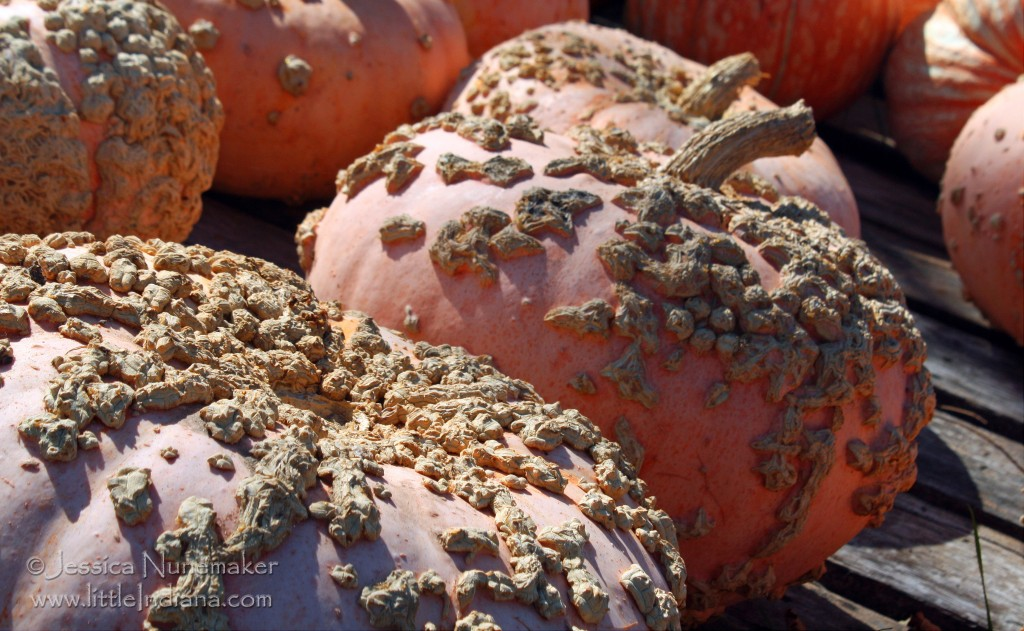 Indiana Pumpkin Patch: Mathew's Tree Farm in Rensselaer, Indiana