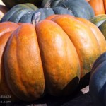 Rensselaer, Indiana: Mathew's Pumpkin Patch Fairytale Pumpkin