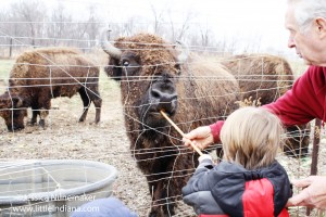Buffalo Run Farm, Grill, and Gifts in Lincoln City, Indiana