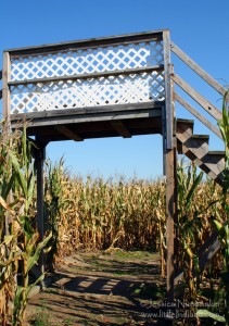 Indiana Pumpkin Patch: Guse Christmas Trees Corn Maze