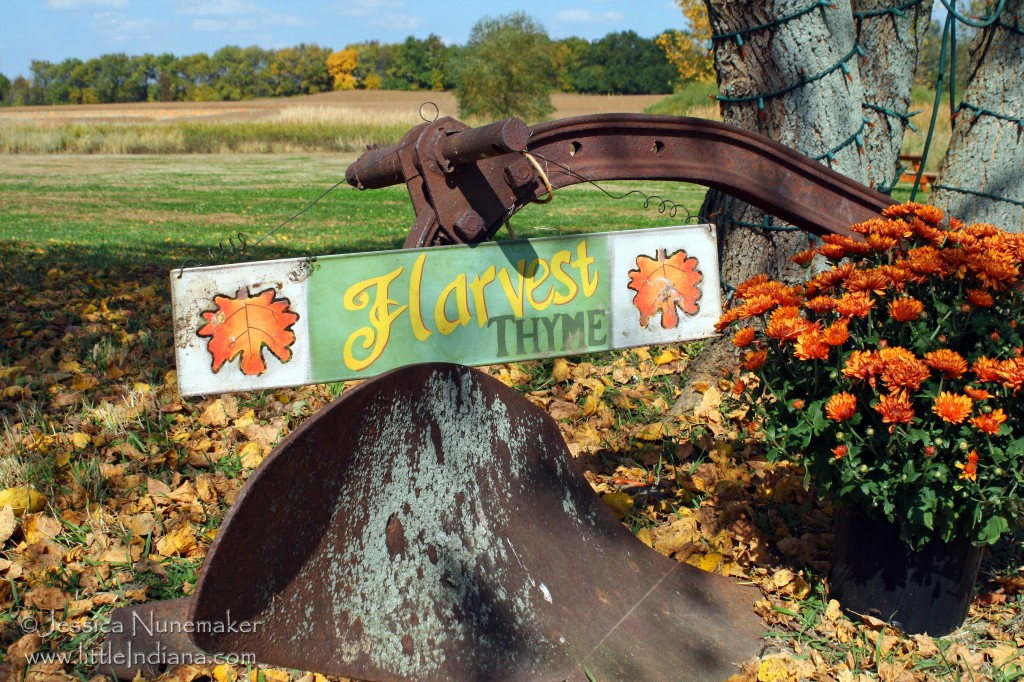 Harvest Tyme Pumpkin Patch in Lowell, Indiana