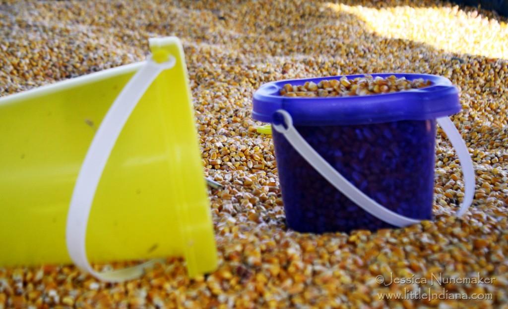Indiana Pumpkin Patch: Corn Box!