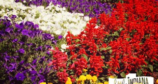 Amish Country Quilt Gardens Tour Indiana: Flowers Blooming
