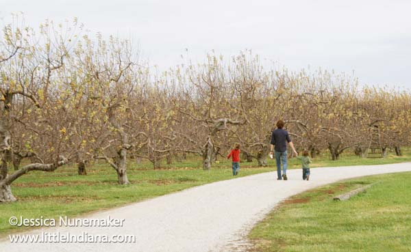 Beasley's Orchard in Danville, Indiana The Apple Orchard
