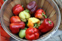 Rensselaer, Indiana: Farmer's Market