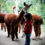 Whispering Pines Alpaca Farm: Nashville, Indiana