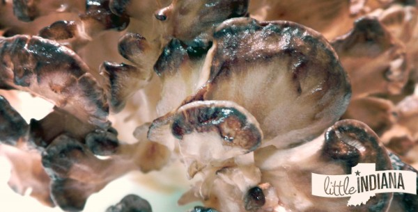 What Sheepshead Mushrooms Look Like