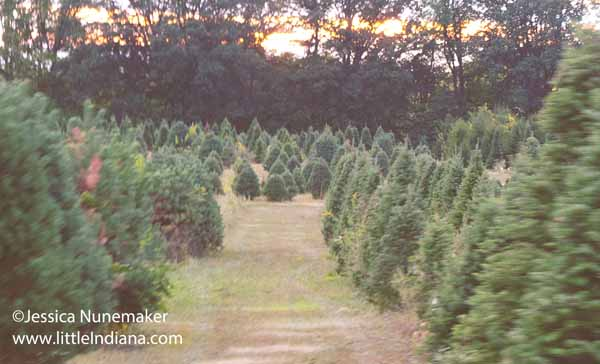 Piney Acres Christmas Tree Farm and Pumpkin Patch in Fortville, Indiana