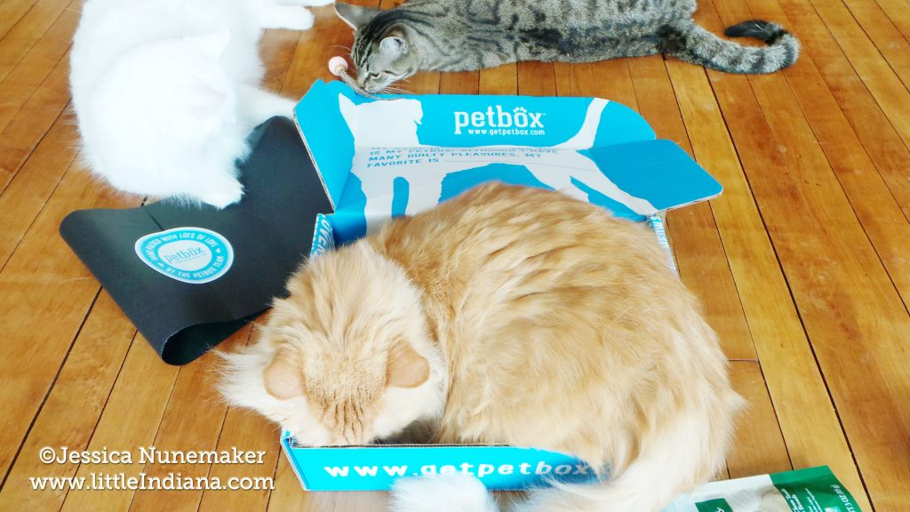 Petbox Cat Review
