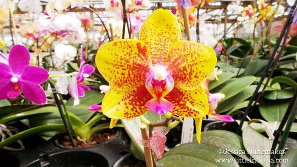 Hilltop Orchids in Cloverdale, Indiana