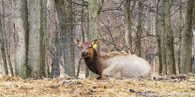 Bugle Valley Elk Farm Tours and VIDEO