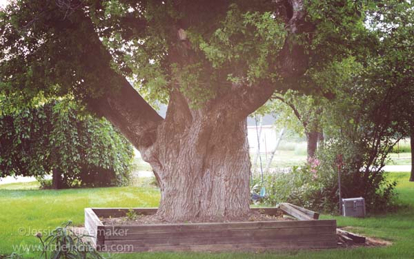 LaRita's Lodge Bed and Breakfast in Upland, Indiana: A Huge Tree and a Swing