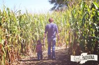Four Acre Corn Maze at at Norm's Pumpkin Patch in Lowell, Indiana