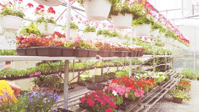 Sassafras Hill Greenhouse in Rensselaer, Indiana